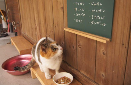 こまきっぷ〜佐柳島、ネコノシマホステル